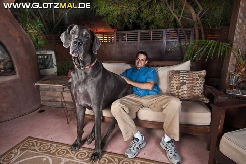 Größter Hund der Welt Giant George